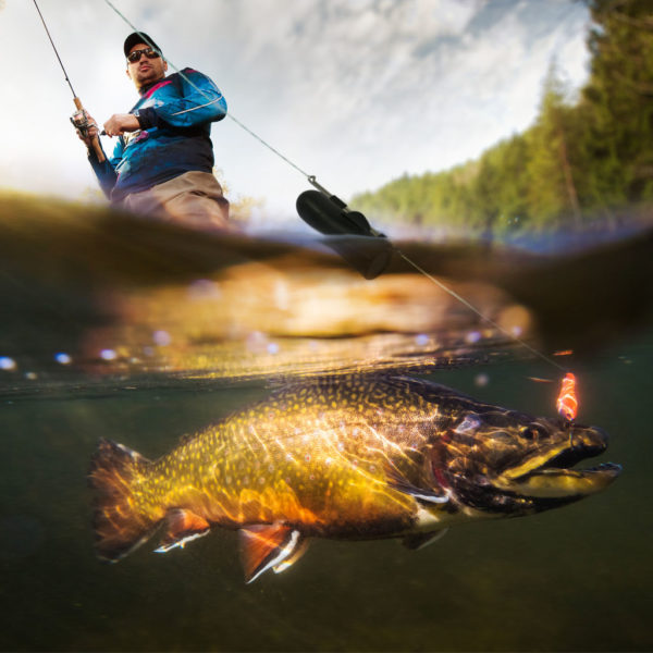 GoFish Freshwater