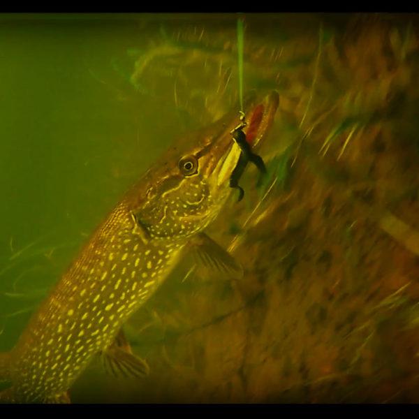 Pike Footage